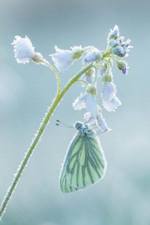Frozen by Johannes Klapwijk