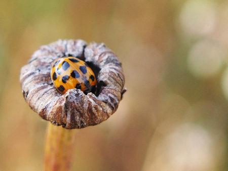 Snug as a Bug by Sue Butler