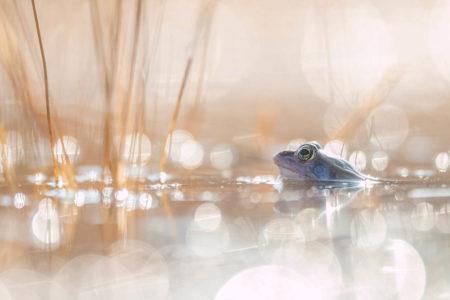 Frog Prince by Johannes Klapwijk