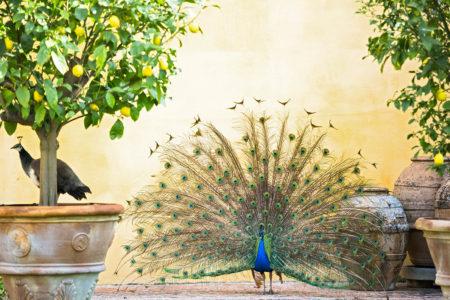 Italian Love by Matteo Carassale