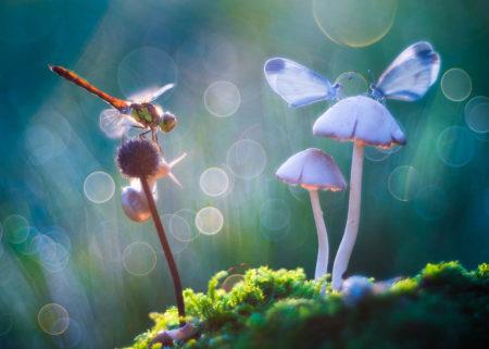 Fairy Tale by Petar Sabol