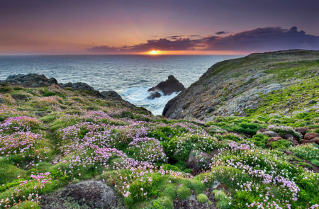 Skomer by Stephanie Foote