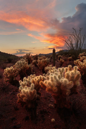 Summer in the Sonoran desert by Monica Siri