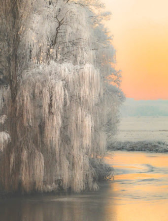 Winter Tree by Ulrike Adam