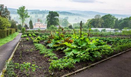 The Kitchen Garden by Jude Gadd