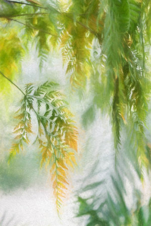 Impressionistic Ferns by Jocelyn Horsfall