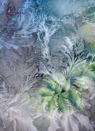 Through Icy Glass by Carol Casselden
