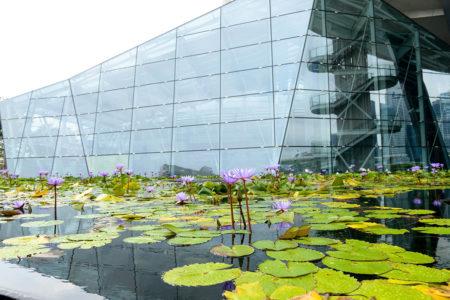 Water Lilies by Mehrnaz Dargahifar