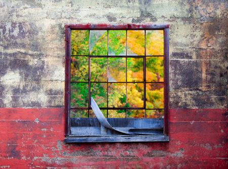 Autumn Colour by Anil Sud