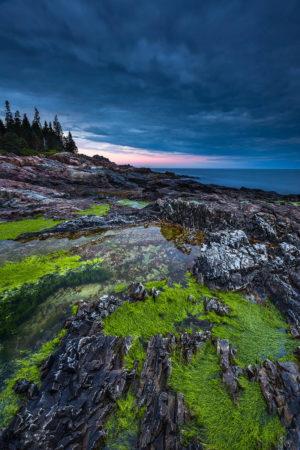 Algae Landscape by J.K. Putnam
