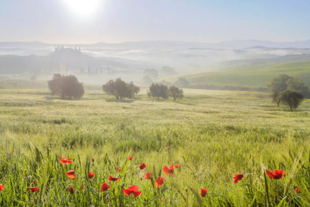 Spring in Val d'Orcia by Julian Elliott