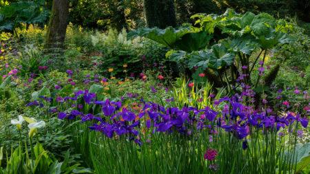 Jubilee Woodland Garden by Nigel McCall