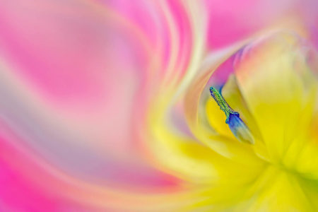 Tulip Abstract by Annemarie Farley