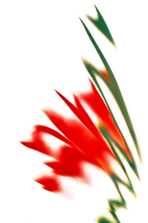 <i>Crocosmia</i> Abstraction by Jocelyn Horsfall