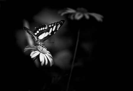 Flower and the Butterfly by Meera Sulaiman