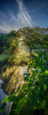 Autumn Morning at Syon House Garden by Simon Hadleigh-Sparks