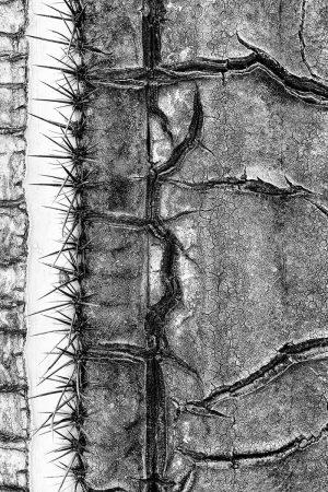 Saguaro by Ari Plosker
