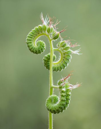 Unfurling by Ashley Moore