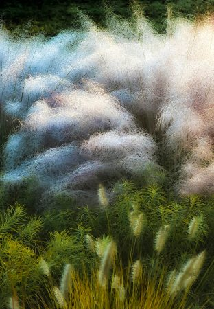 Muhly Grass by Don Rice