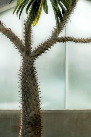 The Madonna Cactus by Robynne Limoges