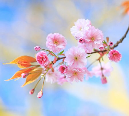 Blossom Pastels by Robert Birkby