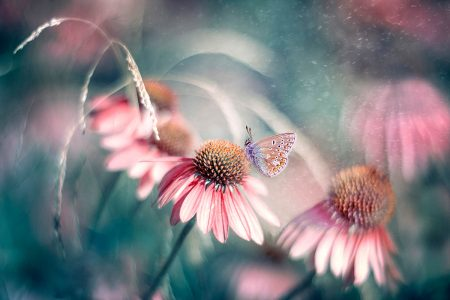 Summer Wonderland by Magda Bognar