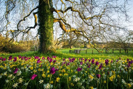 Woolbeding Gardens by Claire Takacs