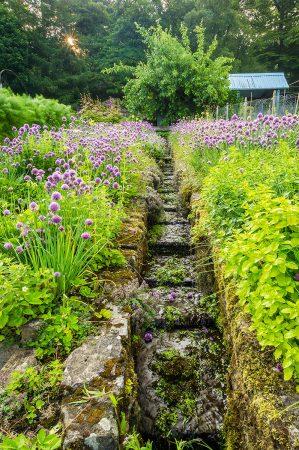 Herb Garden by Jude Gadd