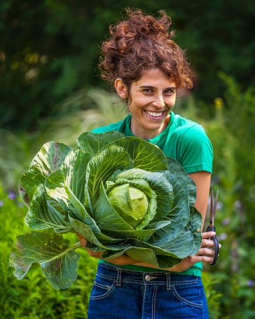 Cabbage Harvest by Laura Berman