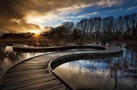 Twisted Path by Jenifer Bunnett