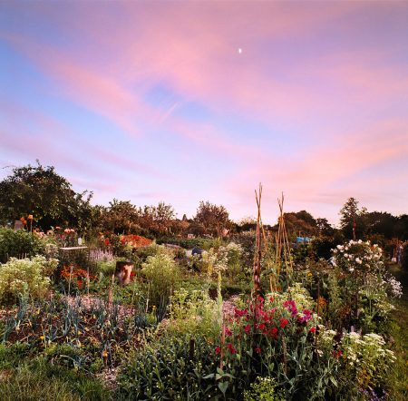 Sweet Peas and Onions in Summer Twilight by Max Rush