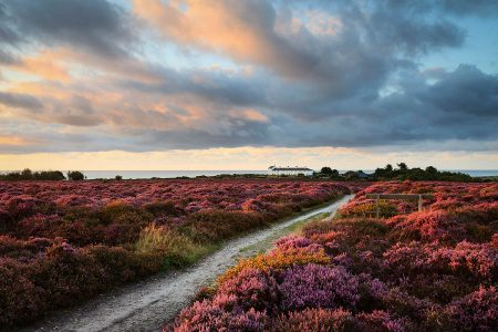 Sea of Heather by Justin Minns