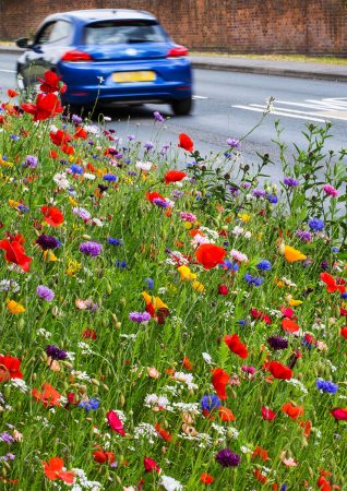 An Urban Roadside Flower Meadow by Nigel Burkitt