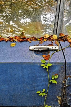 Leaves on a Car Door by David Handley