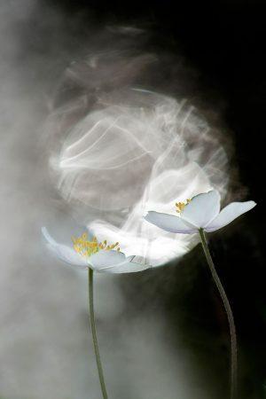Yin Yang by Trui Heinhuis