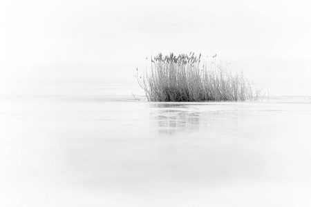 Winter Reeds  by Shauna Sprunger