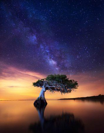 Celestial Cypress by Paul Marcellini