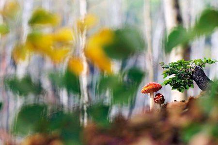 Autumnal Forest by Marek Mierzejewski
