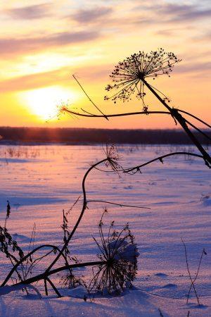 Winter Sunset by Sergey Karepanov