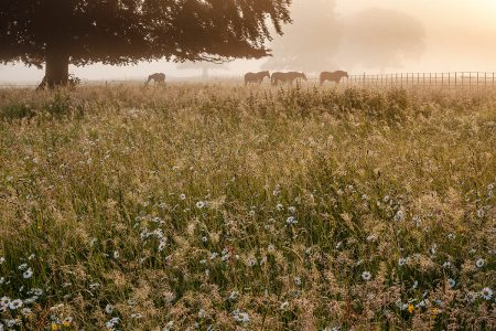 Wildflower Meadow at Sunrise by Anne Green-Armytage