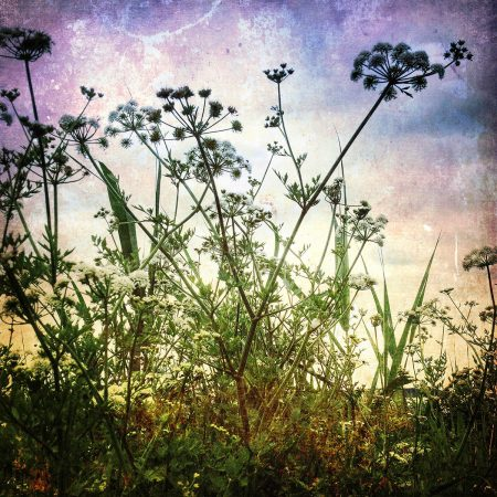 Dance of the Hemlock Water Dropwort by Dianna Jazwinski