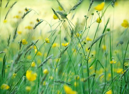 Summer Meadow by Julie Sumner
