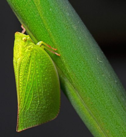 Moth Bug by Deborah Jordan