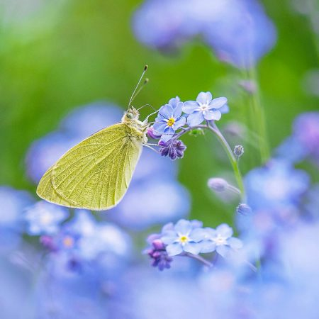 Butterfly Heaven by Sarah-Fiona Helme