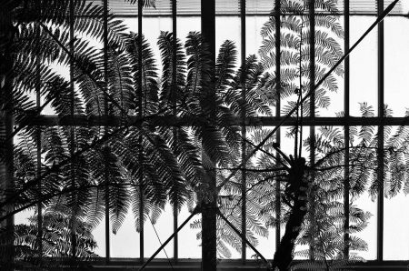 Palm House by Zerina Kaps