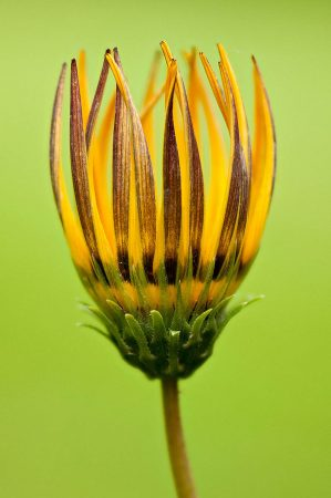 Yellow Daisy by Rachel Sunderland