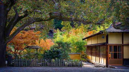 Hakone Garden in Fall Morning by Jean Li
