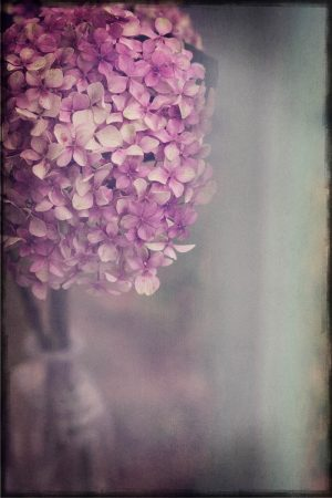 Bohemian Hydrangea by Heather Runting