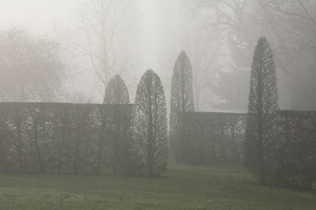 Fog in the Garden by Sergey Karepanov