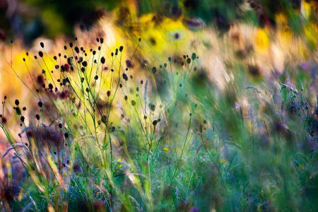 Summer Meadow by Richard Loader
